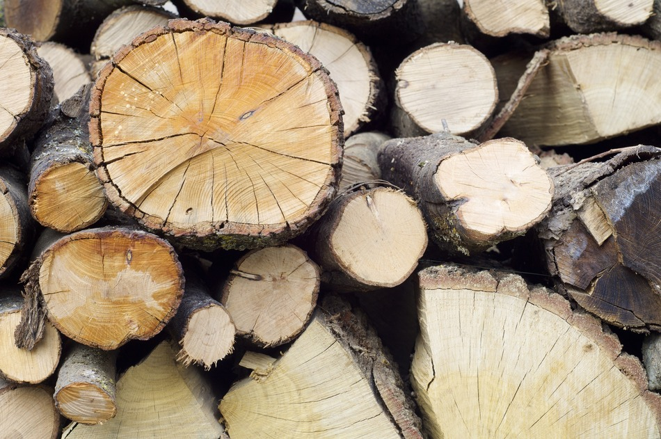 Trunks Of Trees Cut For Firewood