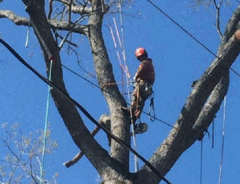 tree services to hire